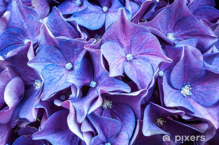 Closeup hydrangea flower Pixerstick Sticker - Flowers
