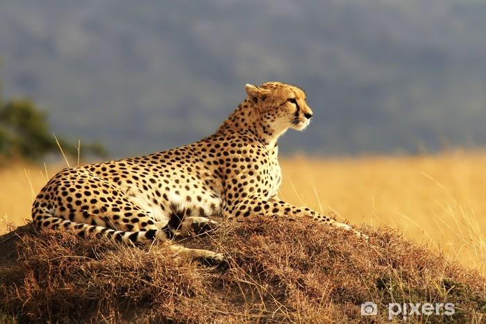 Papier peint vinyle Cheetah sur le Masai Mara en Afrique - Thèmes