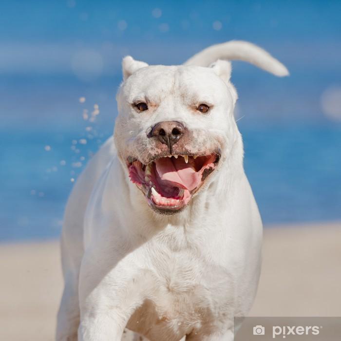 Aufkleber Glucklich Dogo Argentino Hund Pixers Wir Leben Um Zu Verandern