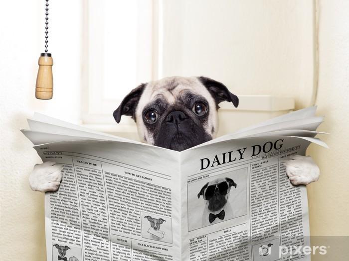 Fototapeta winylowa Pies WC - Mopsy