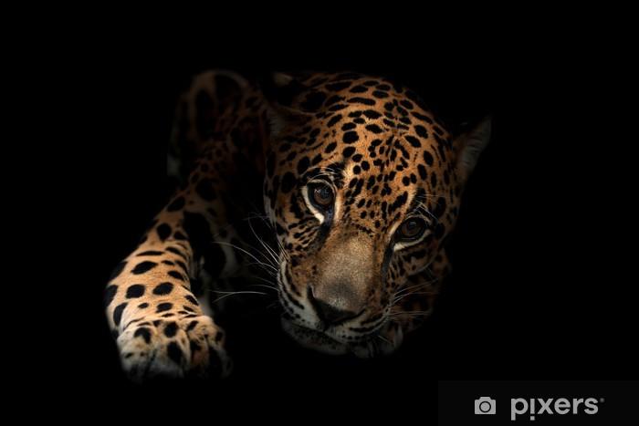 Fototapeta winylowa Jaguar (Panthera onca) w ciemności - Ssaki