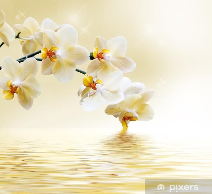 Fototapet av Vinyl Vackert vit orkidé -
