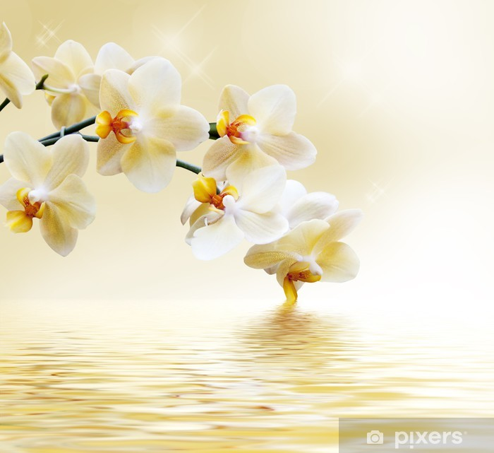 Beautiful white orchid Pixerstick Sticker -