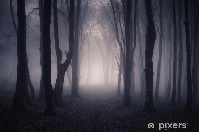Fototapeta winylowa Droga przez ciemny las w nocy - Tematy