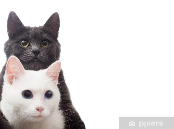 Papier peint vinyle Deux chats sur un fond blanc isolé - Mammifères