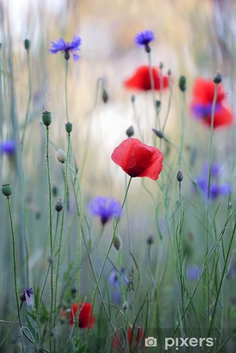 Papier peint vinyle Prairie de fleurs sauvages avec des coquelicots et des bleuets - Bleuets