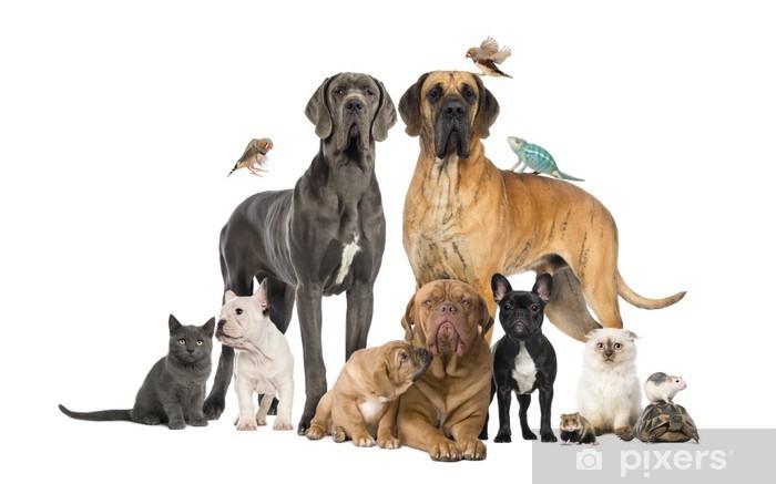 Dekor Grupp Av Husdjur Hund Katt Fågel Reptil Kanin Pixerstick