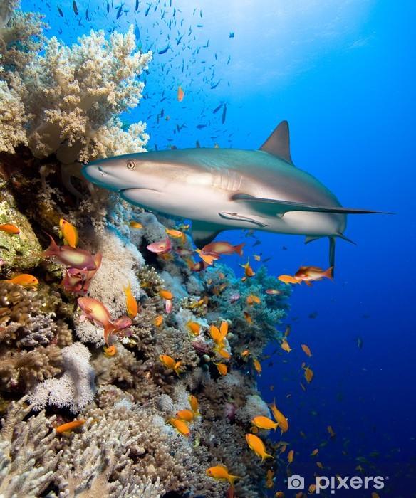 Papier peint vinyle Récif de corail avec le requin - Requins