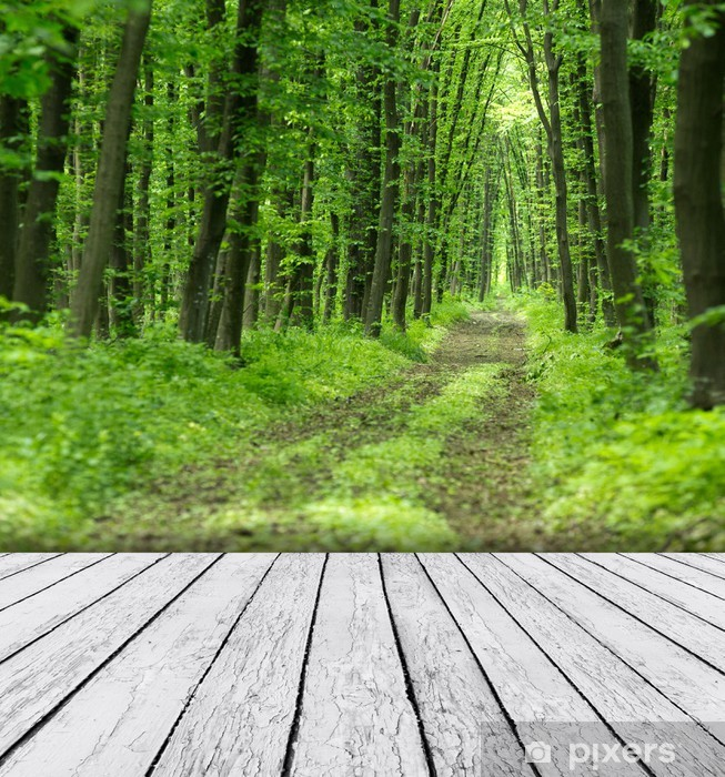 Nature Background With Wood And Beautiful Nature Background Wall