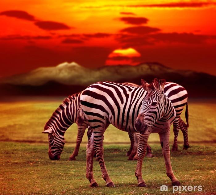 Fototapeta winylowa Zebra stojących w polu zielona trawa przed pięknym Dusky - Tematy