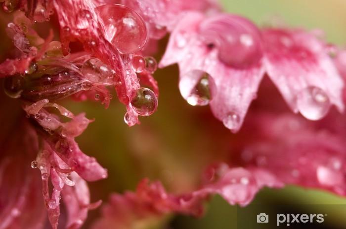Papier peint vinyle Purple rain - Fleurs
