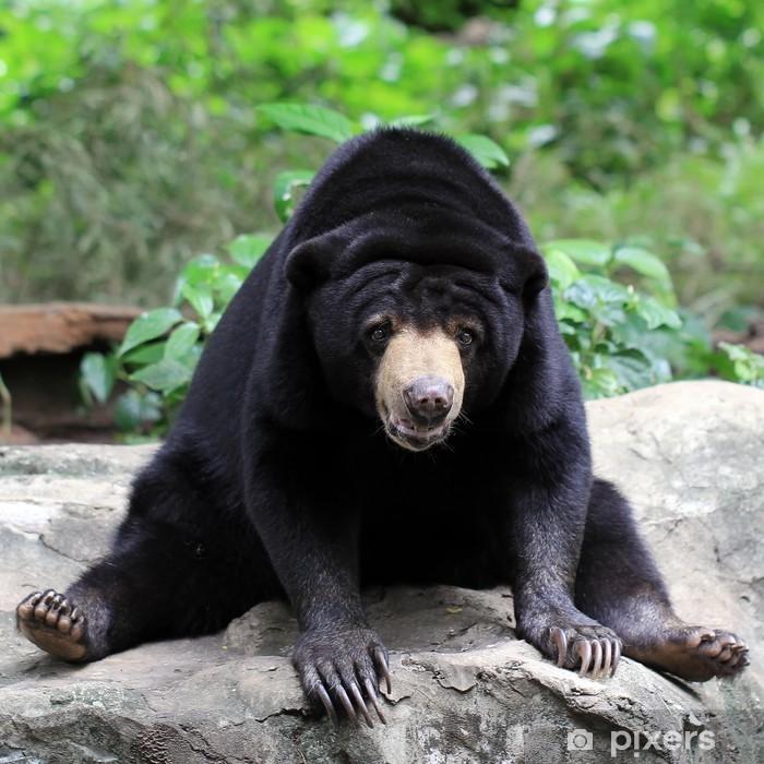 black bear Poster - Themes