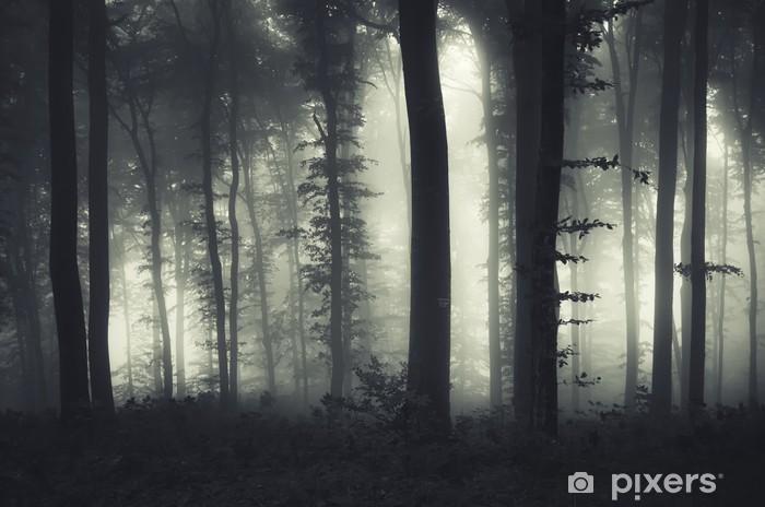 Evening Light In A Dark Misty Forest Wall Mural Pixers