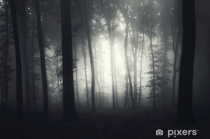 0219b41cbdf9 light in a foggy forest Wall Mural • Pixers® • We live to change