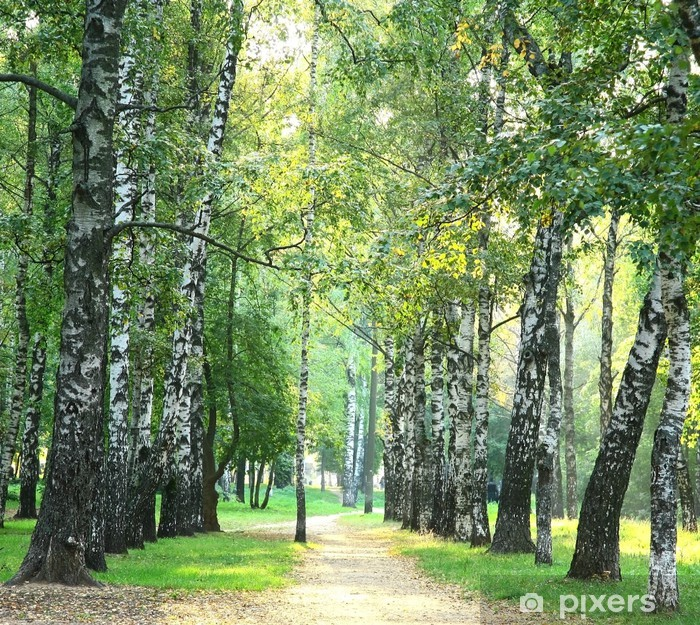 Poster Soirée parc de la ville ensoleillée dans les premiers jours de l'automne - Thèmes