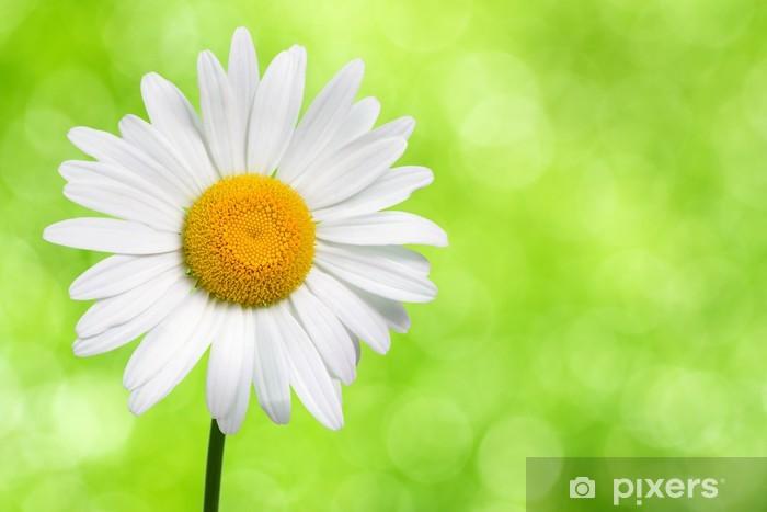 Carta Da Parati Margherita Fiore Su Sfondo Verde Natura Pixers