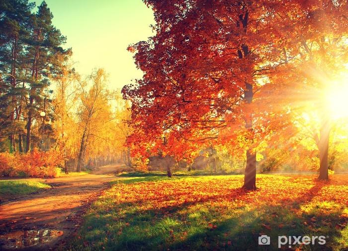 Fotomural Estándar Escena del otoño. Fall. Los árboles y las hojas en la luz del sol - Temas