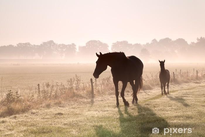 Fototapeta samoprzylepna Konia i źrebię sylwetki w mgle - Tematy
