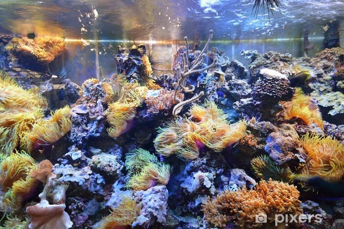 Papier peint vinyle Aquarium marin exposé dans un zoo - Sous l'eau