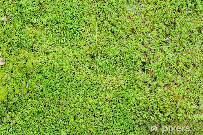 Grøn mos baggrund Vinyl fototapet - Naturens Vidundere