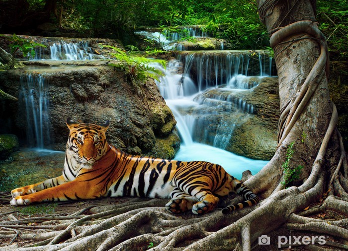 indochina tiger lying with relaxing under banyantree against bea Vinyl Wall Mural - Tigers