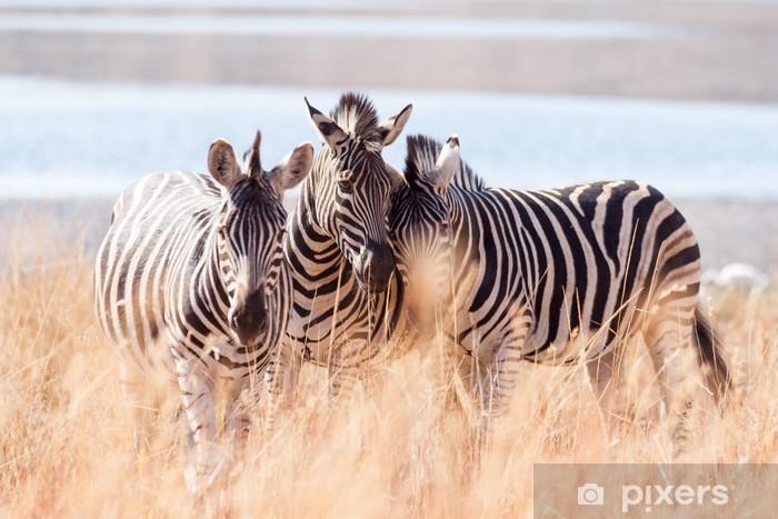 Fototapeta winylowa Małe stado dzikich Burchells Zebra otarcia głowy w pobliżu jeziora - Tematy