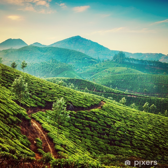 Plakat Plantacje herbaty Instagram filtr koloru - Rolnictwo