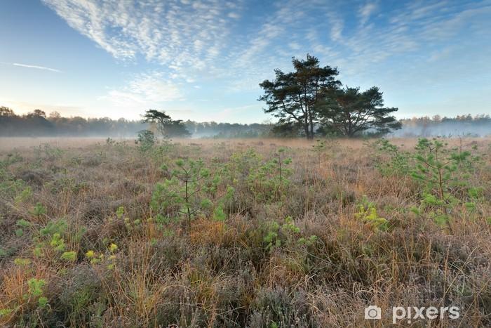 Naklejka Pixerstick Jesienią wschód słońca nad bagno - Pory roku