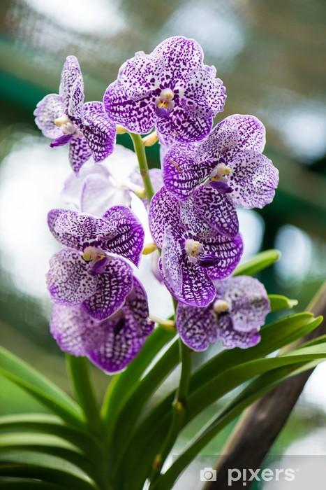 Vinyl-Fototapete Bunte Orchideen Blumen auf hellen Sommertag - Blumen