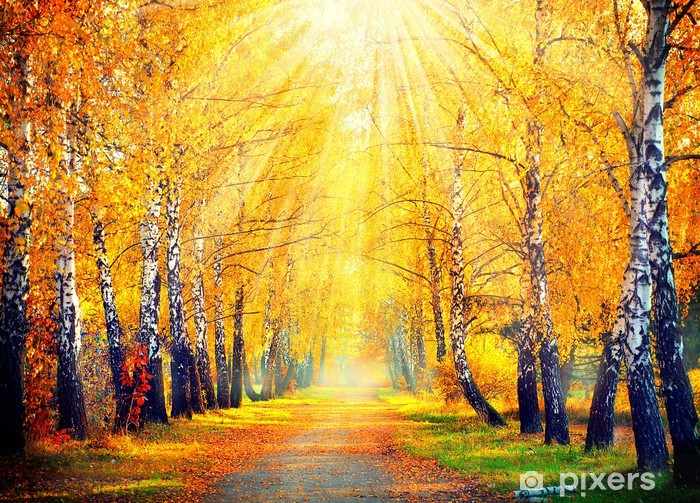 Autumn in the park Self-Adhesive Wall Mural - Destinations