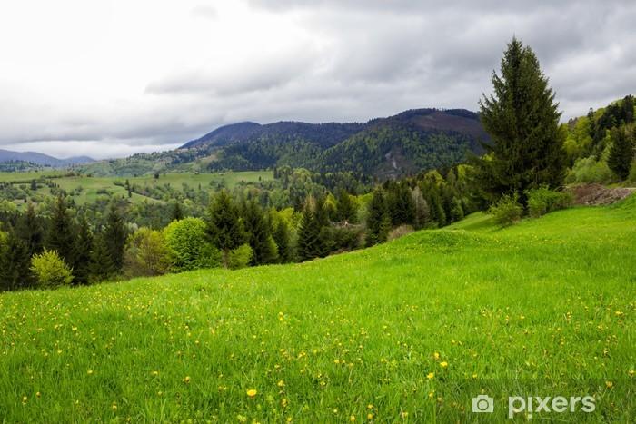 Fototapeta winylowa Las iglasty na zboczu góry - Krajobraz wiejski