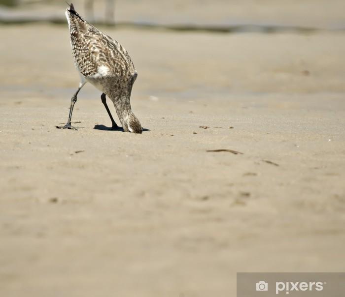 Fototapeta winylowa Głowy w piasek - Ptaki