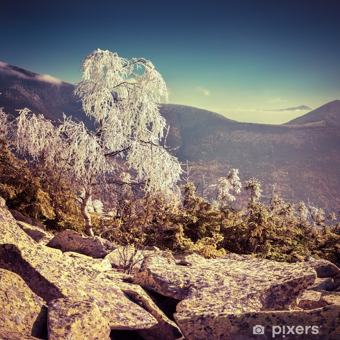 Birch tree covered with first frost in the mountains. Pixerstick Sticker - Seasons
