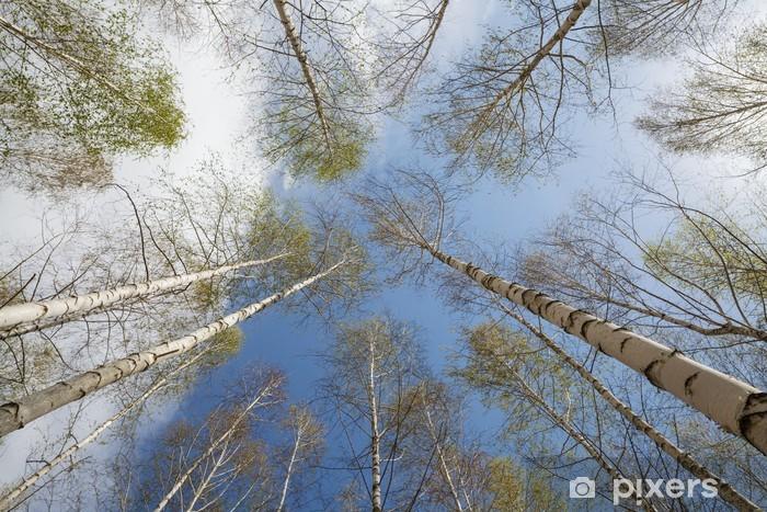 Naklejka Pixerstick Krajobraz las - Tematy