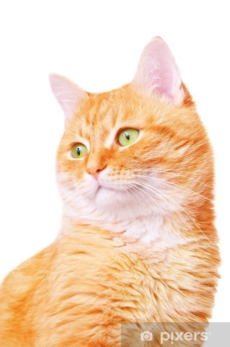 Carta Da Parati Bellissimo Gatto Adulto Rosso Pixers Viviamo