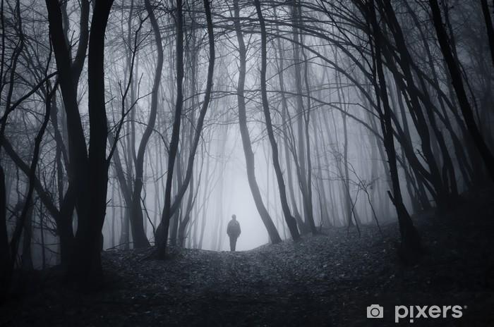 Stiahnite si zdarma túto fotografiu o Fantasy Múmiový Les z Pixabay knižnice public domain obrázkov a.