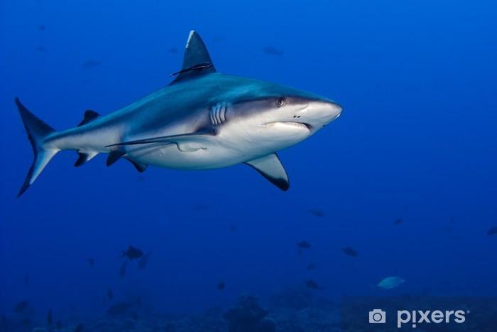 Papier peint Attaque de requin sous-marin • Pixers® - Nous vivons pour changer