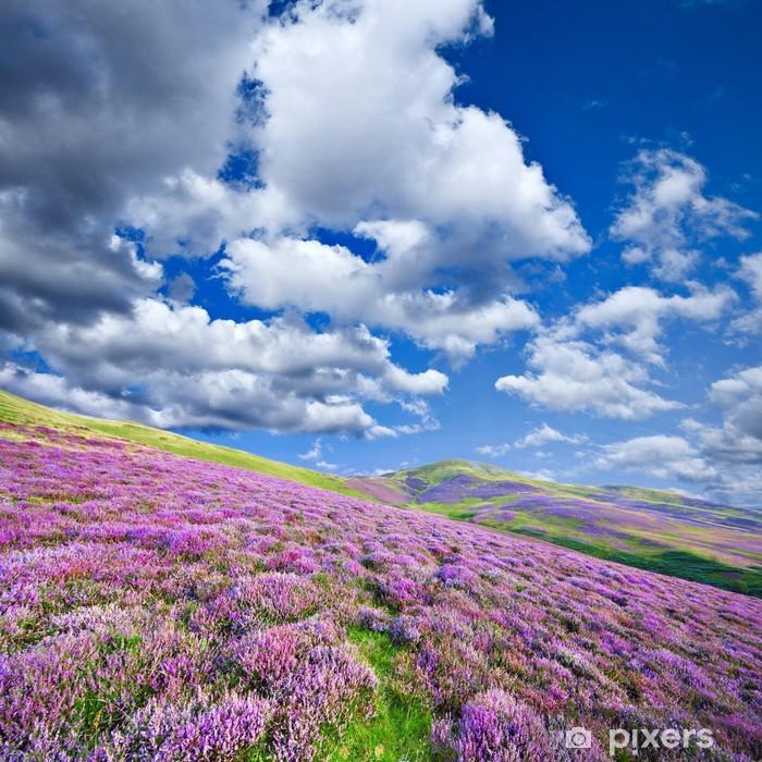 Fototapeta winylowa Kolorowe wzgórza zbocza pokryte fioletowe kwiaty Wrzos - Wrzos