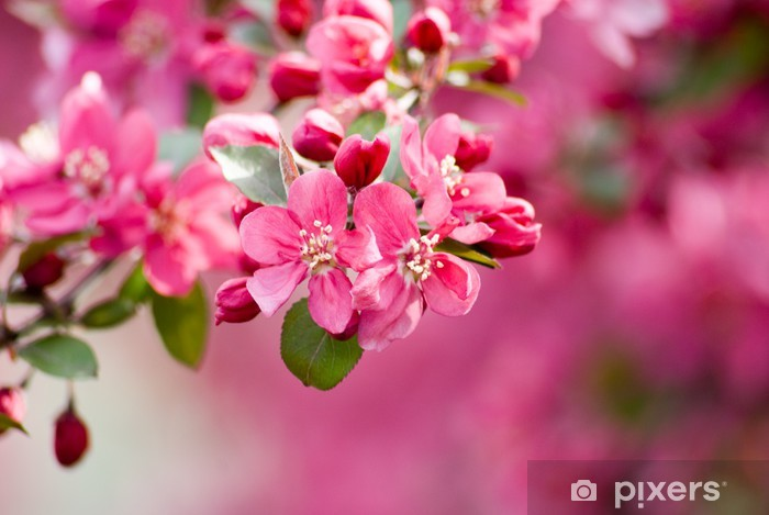 Sticker Pixerstick Crabapple Blossom 1 - Thèmes