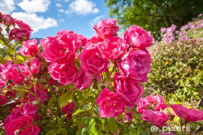 Vinylová fototapeta Růžové růže v zahradě Eden - Vinylová fototapeta