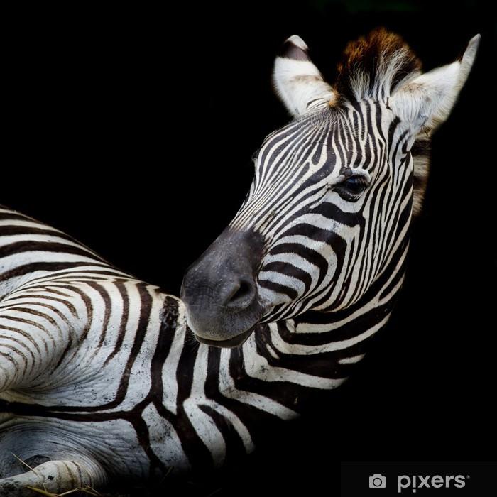 Naklejka Pixerstick Headshot burchell Zebra - Tematy