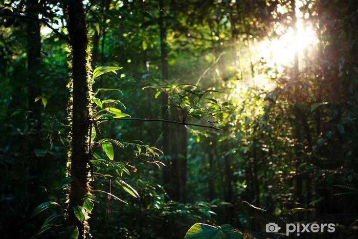 Solstråler dybt i regnskoven Vinyl fototapet -