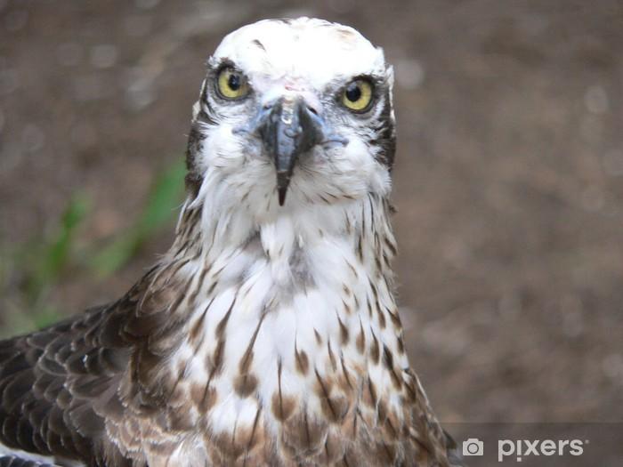 osprey Pixerstick Sticker - Birds