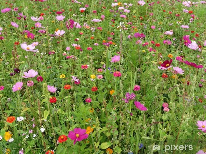 Fototapeta winylowa Indre - pola kwiatowe - Krajobraz wiejski