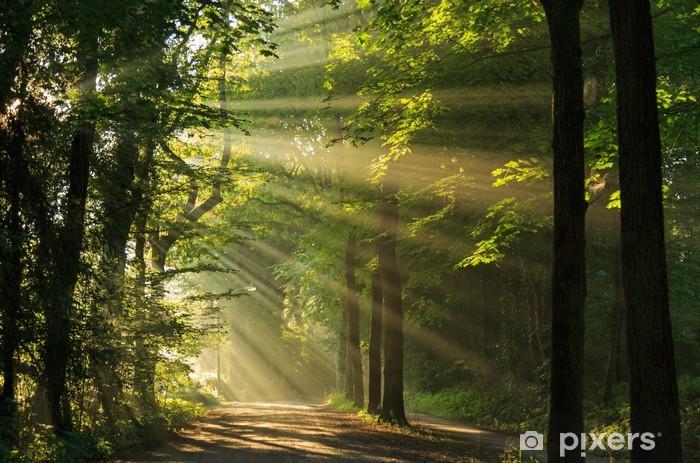 Fototapet av Vinyl Solen strålar skiner genom träden i skogen. - Teman