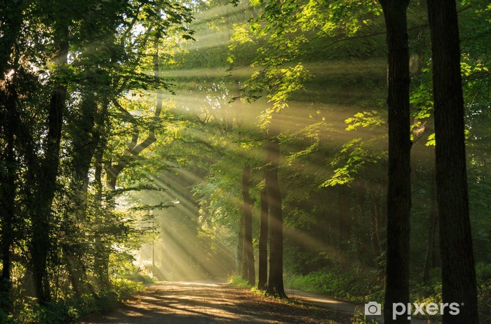 Sun rays shining through the forest Pixerstick Sticker - Themes