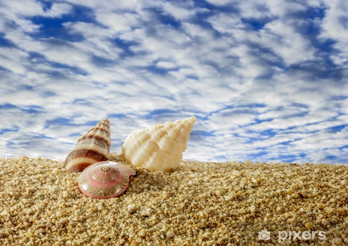 Papier peint vinyle Coquillages sur la plage de sable avec un ciel. - Vacances