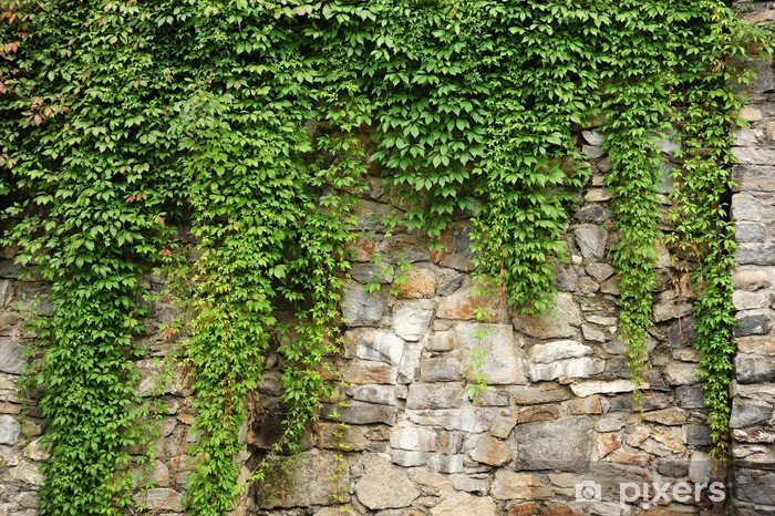 Green Ivy Wall Mural Pixers 174 We Live To Change