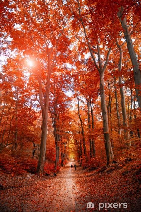 Naklejka Pixerstick Droga przez parku jesienią unde słońcu -
