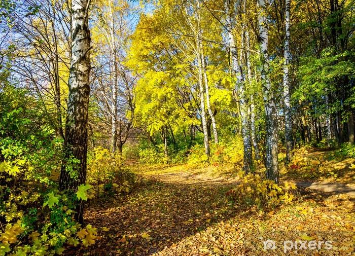 Pixerstick Sticker Prachtige herfst laan in het bos. - Thema's